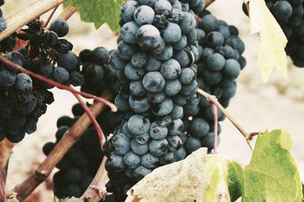 winery-02